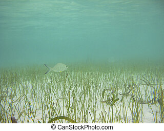Fish in a shallow