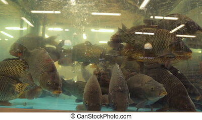 Fish in aquarium at supermarket