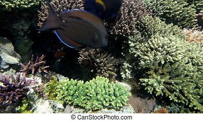 Fish swimming in aquarium. Underwater Observatory Marine Park. Eilat, Israel