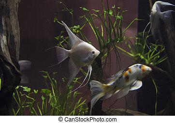 Fish in aquarium - a Fish in aquarium