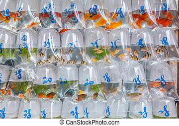 Fish in bags at the fish market in Mongkok Hong Kong