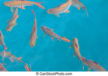 Fish in clear water view from above