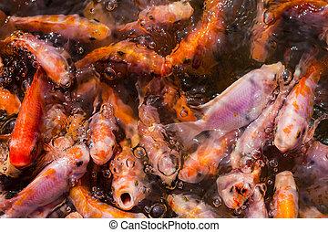 fish in many shades