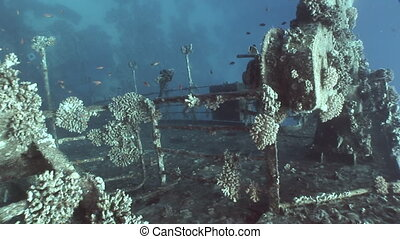 Fish in Salem Express shipwrecks underwater in Red Sea in...