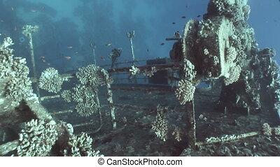 Fish in Salem Express shipwrecks underwater in Red Sea in...