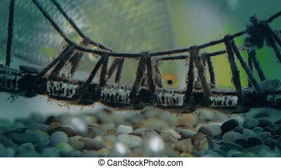 fish in the aquarium close-up