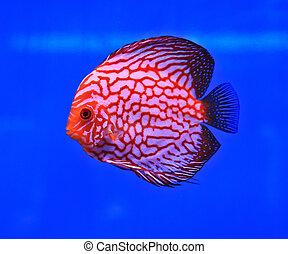 Fish in the aquarium glass
