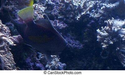 Fish in the aquarium. Tropical reef fish.