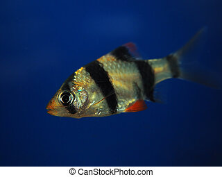 Fish in the deep blue water