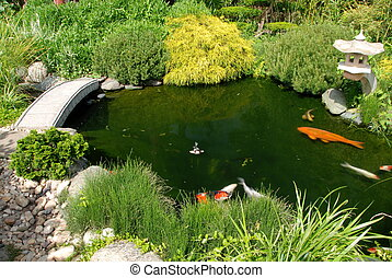 Fish in the Japanese garedn - Koi fish in a pond of a...