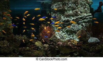 Fish in the public aquarium