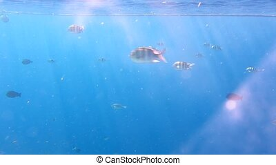 Fish in the Red Sea