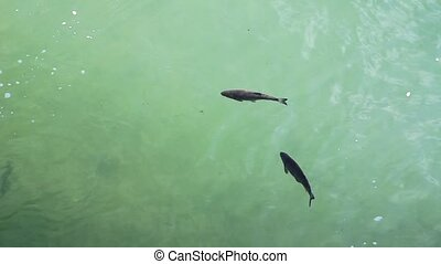 fish in the water