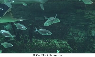 Fish In Undersea Grotto
