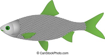 fish in vector