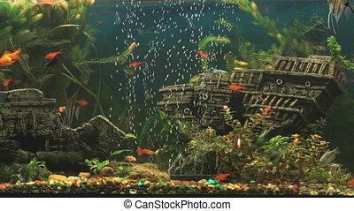 Fish into aquarium in form of ancient sunken ship