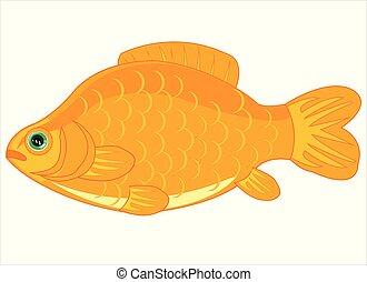 fish, isolé, blanc, carpe, fond