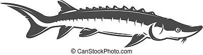 fish, isolé, illustration, esturgeon, arrière-plan., vecteur, blanc, icône