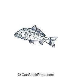 Fish, isolated common carp hand drawn sketch icon