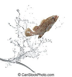 fish jumping out from water creating splash