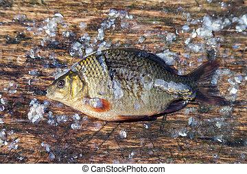 fish., karp, słodkowodny