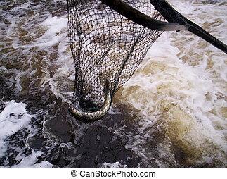 fish, lejt behálóz