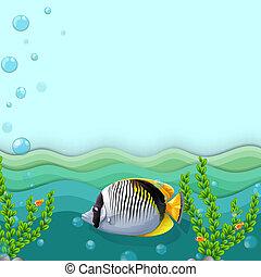 fish, mare, sotto