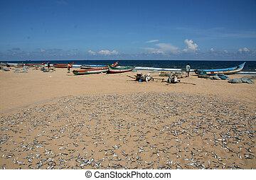 Fish - Marina Beach, Chennai, India - Marina Beach, Chennai,...