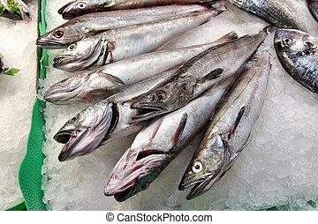 Fish market at Boqueria market in Barcelona, Spain. Fresh European merluccid hake (Merluccius merluccius) fish.