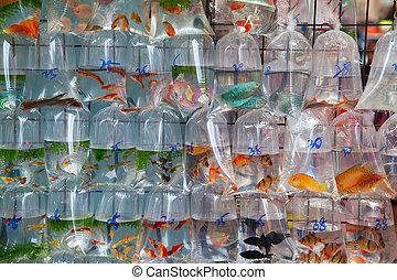 """""""Fish market"""" - Famous """"Goldfish market"""" in Hong Kong, China..."""