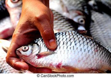 FISH MARKET THAILAND
