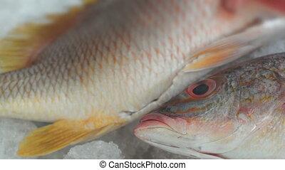 Fish Market Three Red Fish Dolly - Close up, dolly shot of...