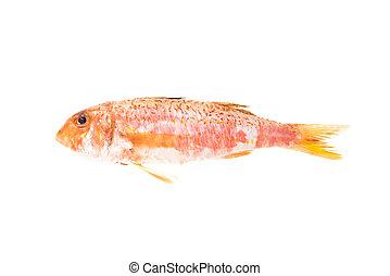 fish., mediterráneo, comida., crudo, salmonete, rojo