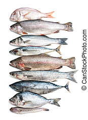 fish, mer, collection