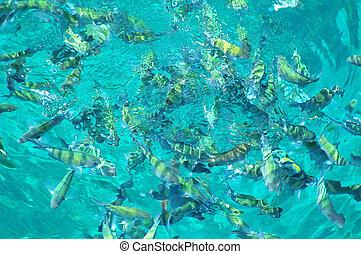 fish, mer