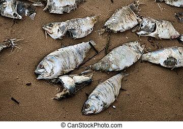 fish, mort