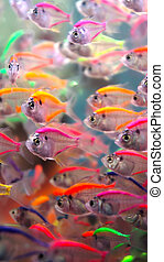 fish, néon