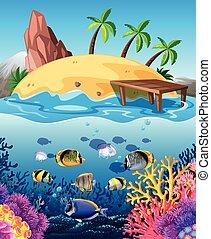 fish, nuotare underwater, e, isola