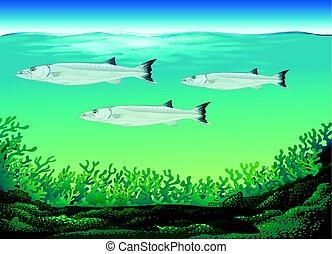 fish, nuoto, tre, mare, sotto