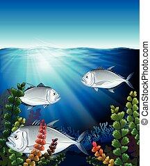 fish, nuoto, tre, oceano
