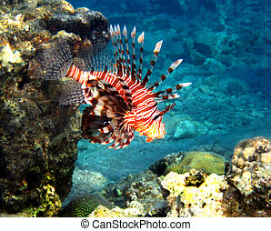 Fish of the Red Sea