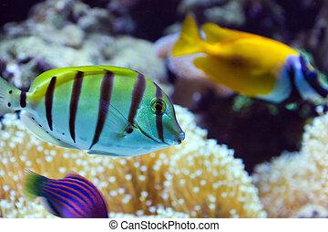 fish on a aquarium