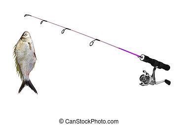 fish on fishing-rod isolated on white