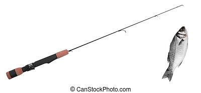 fish on fishing-rod