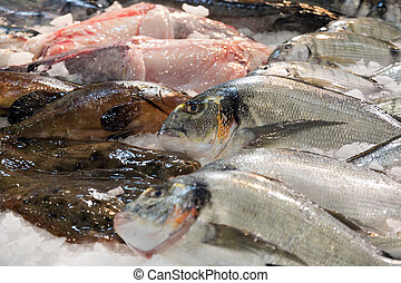 fish on  market counter