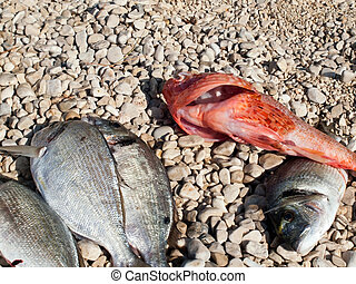 Fish on the beach background