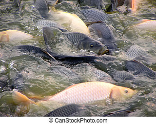 fish on the surface of water