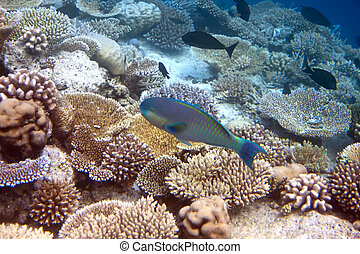 fish over the coral reef