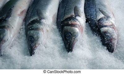 Fish Packed In Ice Tracking Shot - Passing raw whole fishes...