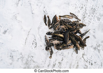 fish Perccottus glenii the catch of winter fishing lies on the snow
